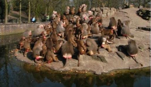 Dierenpark Emmen - Cc De Speld