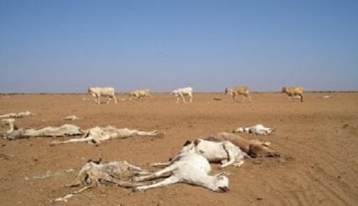 Dode dieren - CC Oxfam international