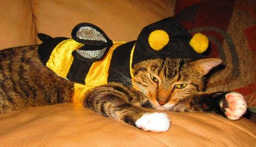 Kat met bijenpak - Cc Pets Adviser - Flickr