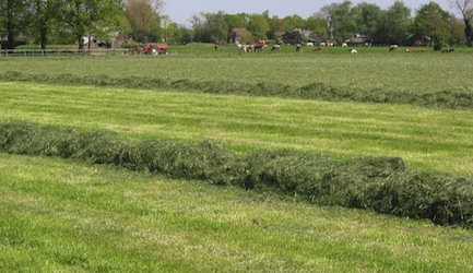 Kuilvoerwinning_(grass_silage)