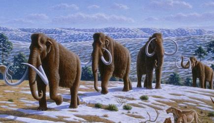 Mammuthus primigenius Cc wikimedia
