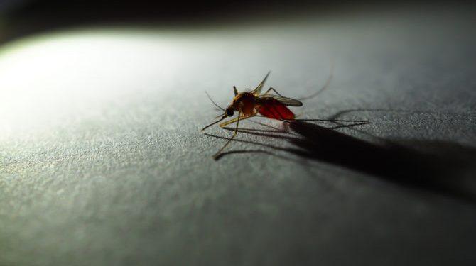 mug kan eerlijk gezegd ook niet slapen als remco de hele tijd in de kamer ligt
