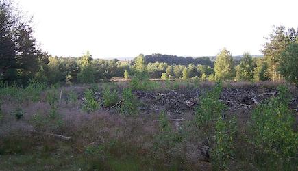 Ginkelse Heide - Wikicommons ArjanH