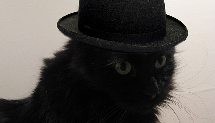 cat with hat - cc  erikamatthias