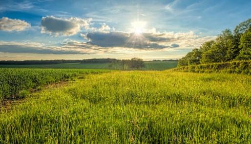 meadow - cc stephan sanders
