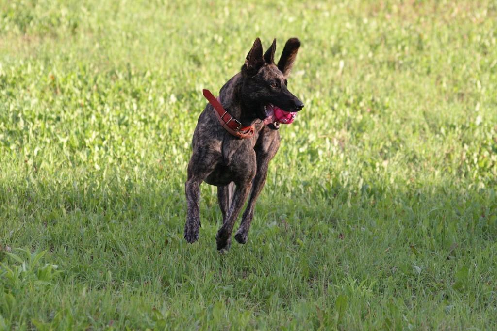 dog-1022538_1920