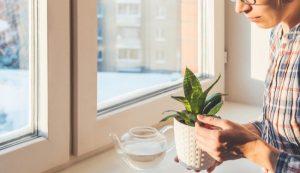 Konstantin Aksenov / Shutterstock.com